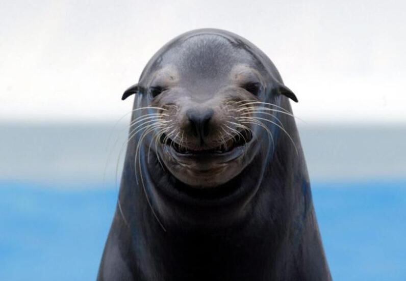 今天是国际海豹日,关于这种可爱的动物你了解多少2019