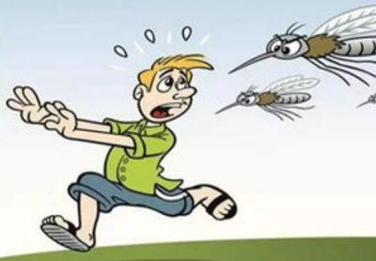 天气热,蚊虫多2019济宁市疾控中心教你如何安全有效驱杀