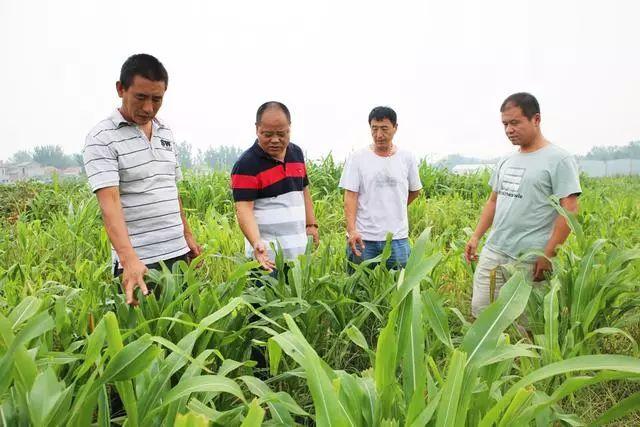http://www.fanchuhou.com/jiaoyu/910097.html